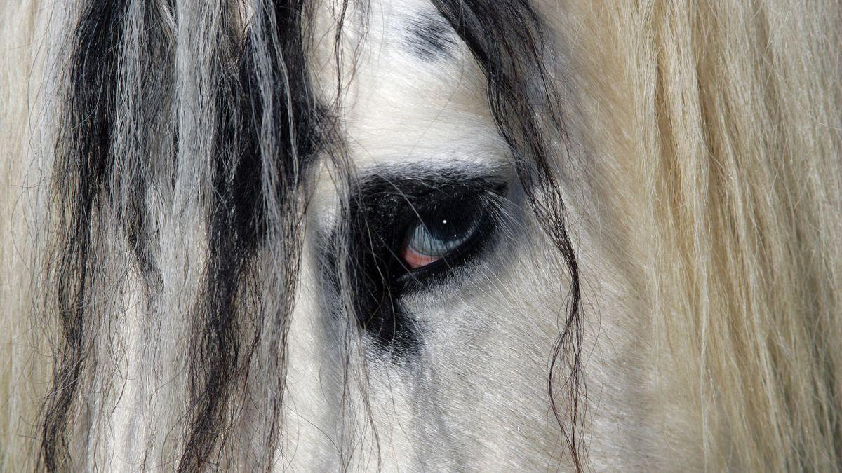 Ein Pferd, Nahaufnahme Kopf