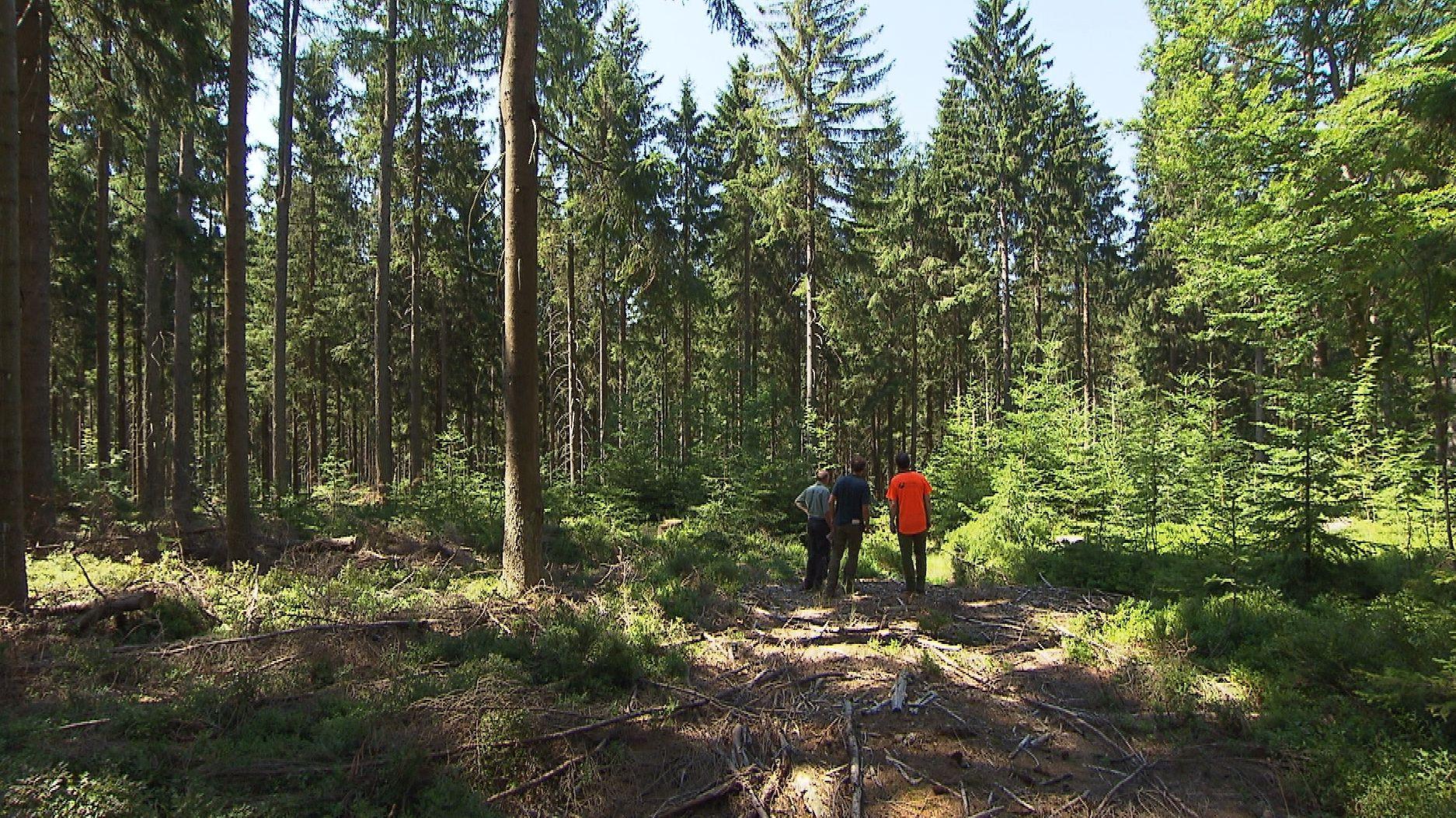 Aktivisten des bergwaldprojekts im Fichtelgebirge