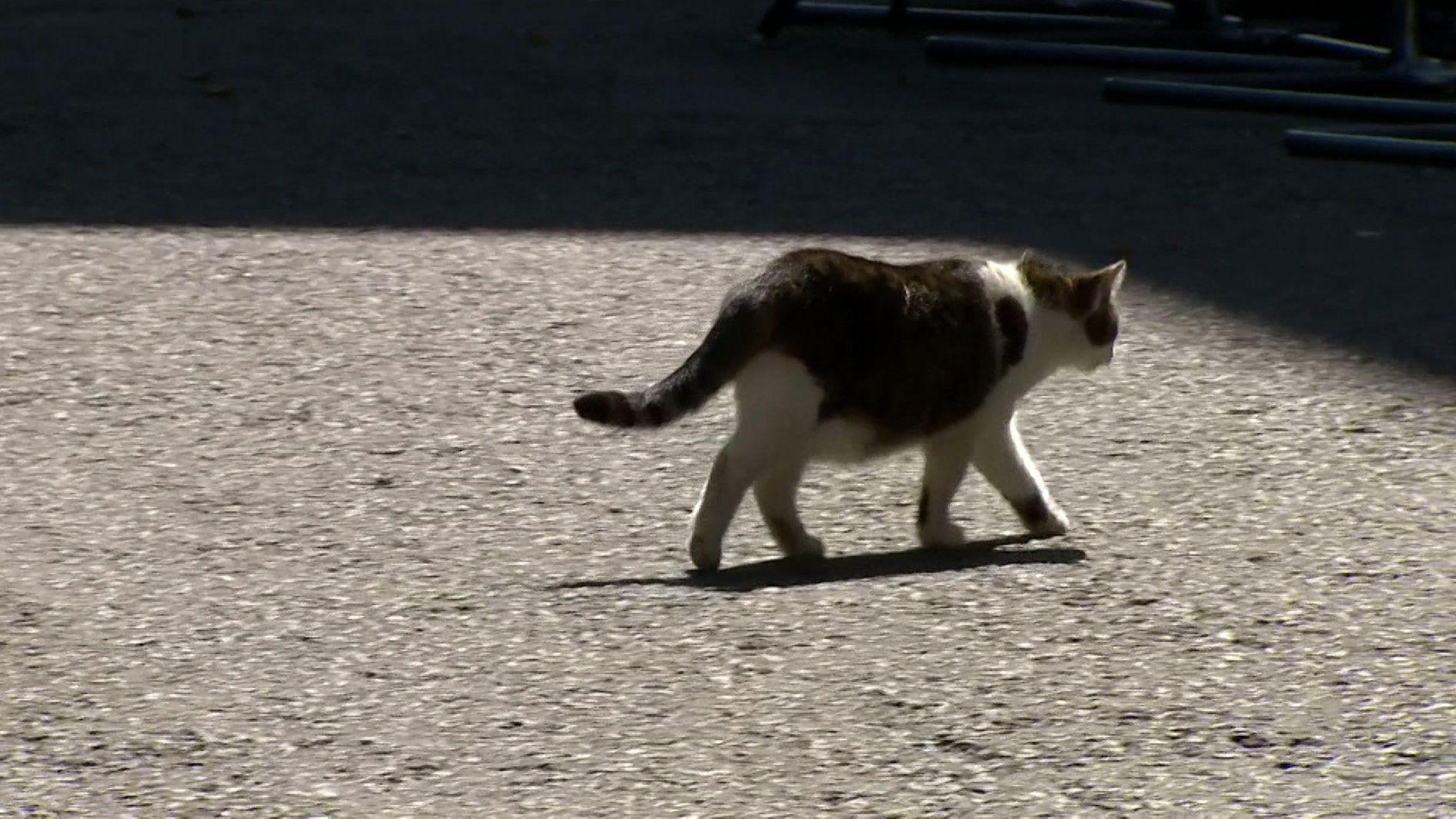 Larry the Cat