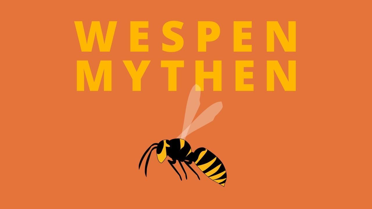 Wespen und Wespenmythen. Wir machen den Fakten-Check zu den stechenden Insekten.