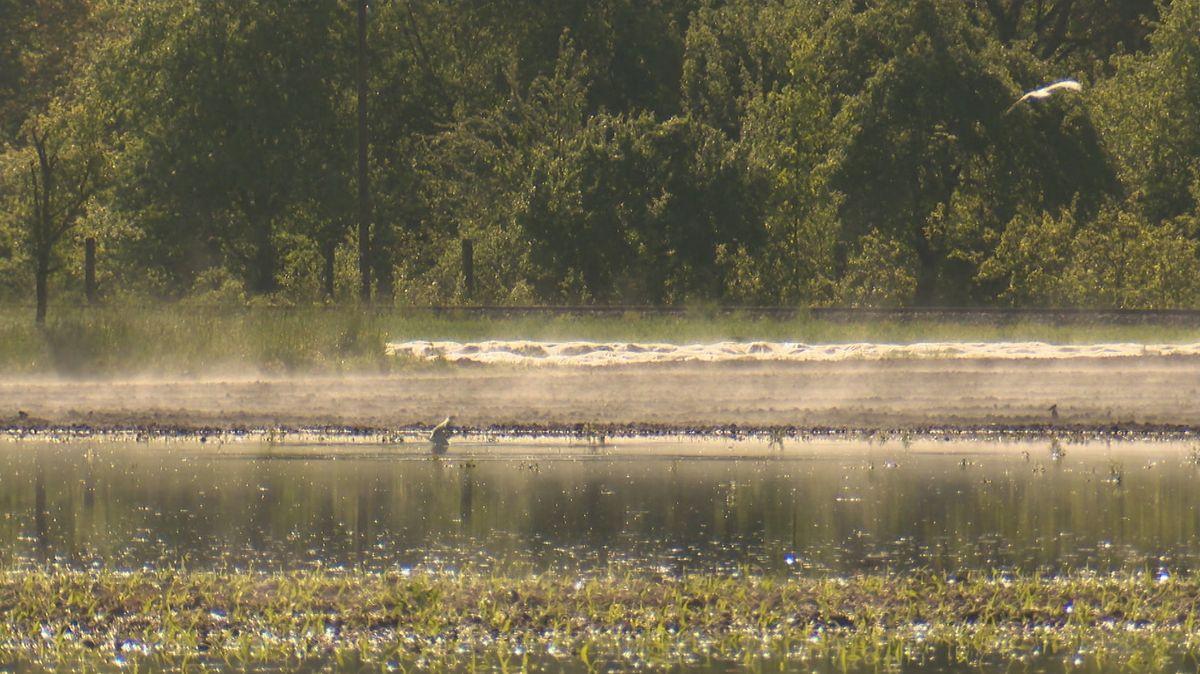 Bild einer überfluteten Wiese