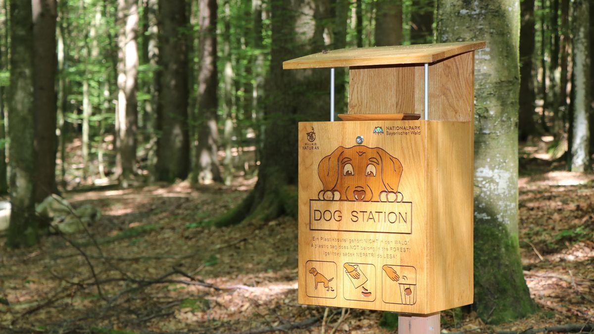 Eine Dog-Station im Wald für Hundekot