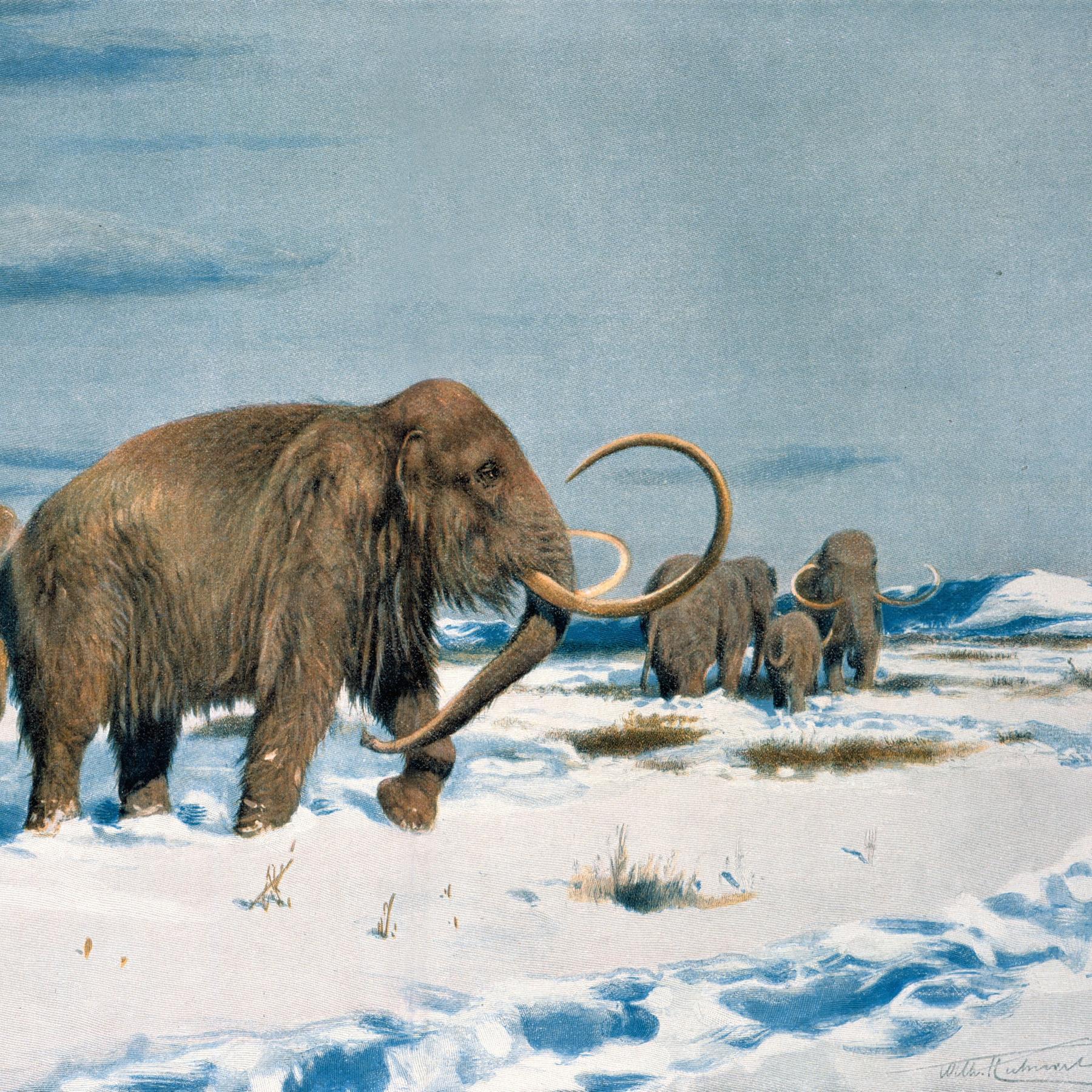 Mammut & Co - Die Megafauna der letzten Eiszeit