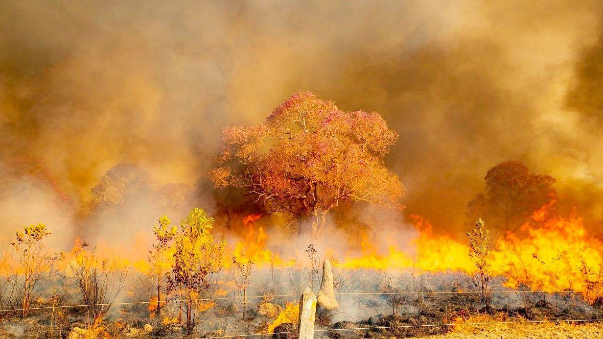 Brand im brasiliansichen Pantanal