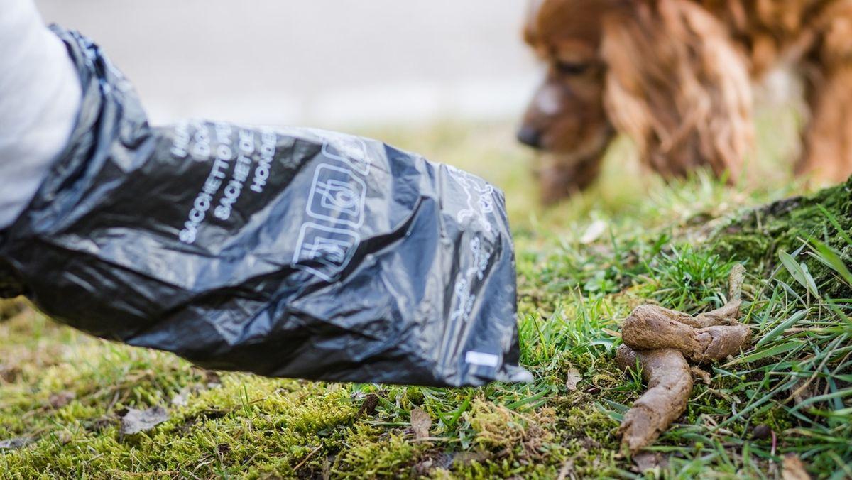 Hundehalter entsorgt mit Plastiktüte einen Hundehaufen