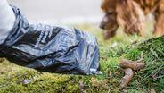 Hundehalter entsorgt mit Plastiktüte einen Hundehaufen | Bild:dpa-Bildfunk/Christoph Schmidt