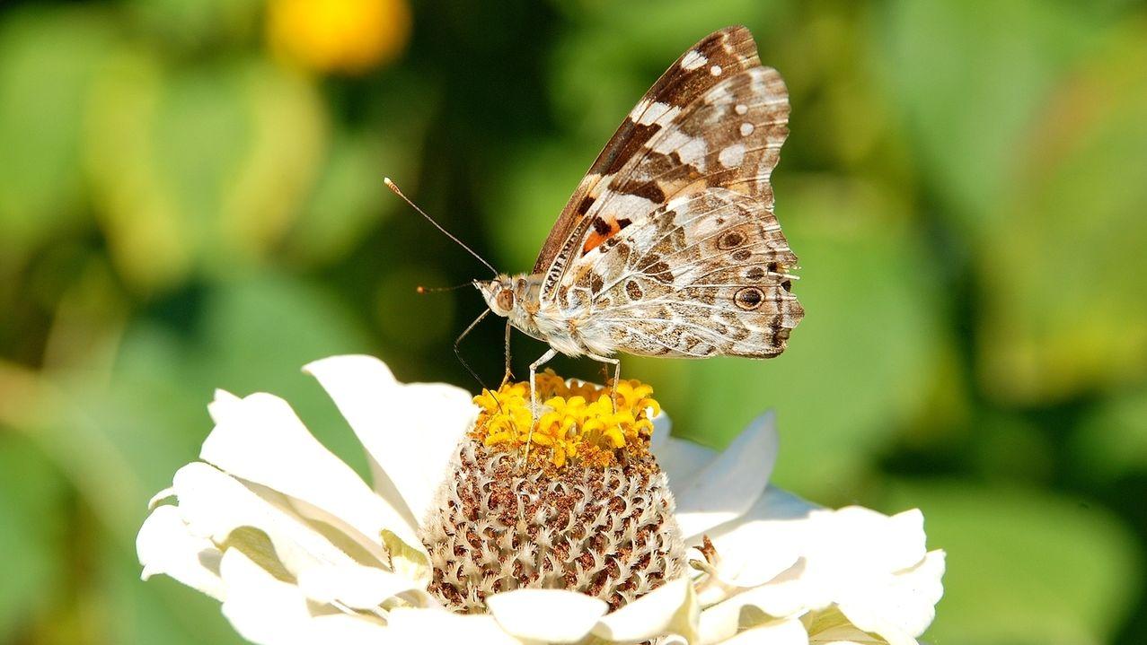 Ein Schmetterling hat sich auf einer Blume niedergelassen.