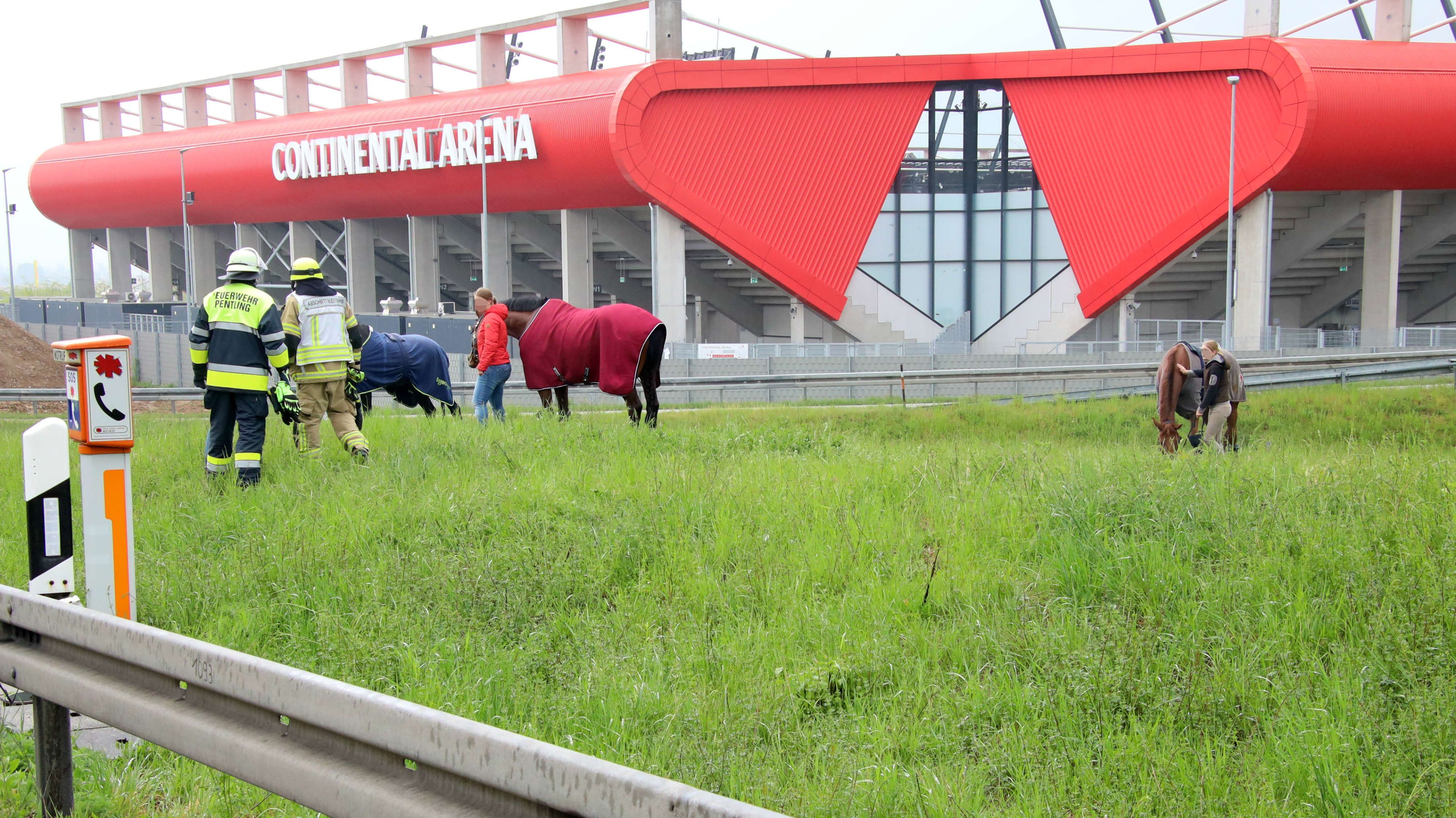 Pferde auf der Wiese innerhalb der Autobahn-Anschlussstelle Regensburg-Universität