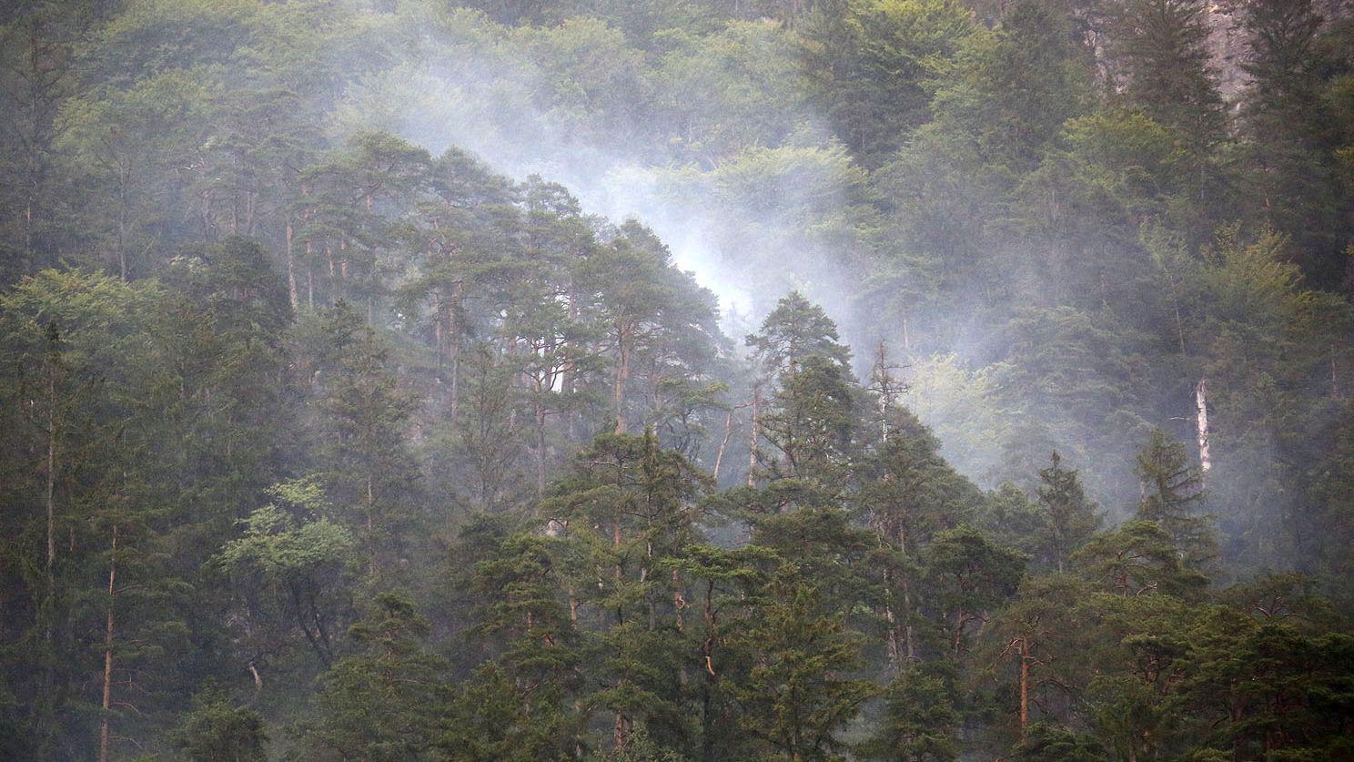Blitz schlägt im steilen Bergwald am Poschberg ein und setzt Bäume in Brand