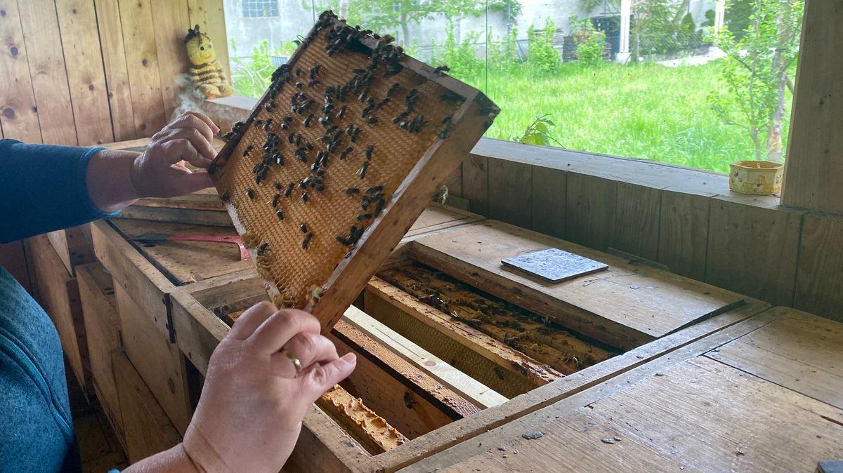 Angela Sollinger hält eine Wabe, auf der sich Bienen befinden.