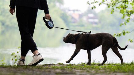 Versierte Hundesitter können Frauchen und Herrchen entlasten (Symbolbild).