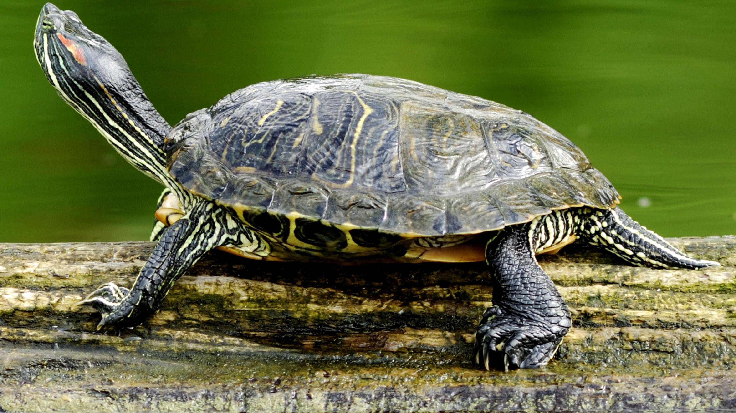 Symbolbild Schildkröte