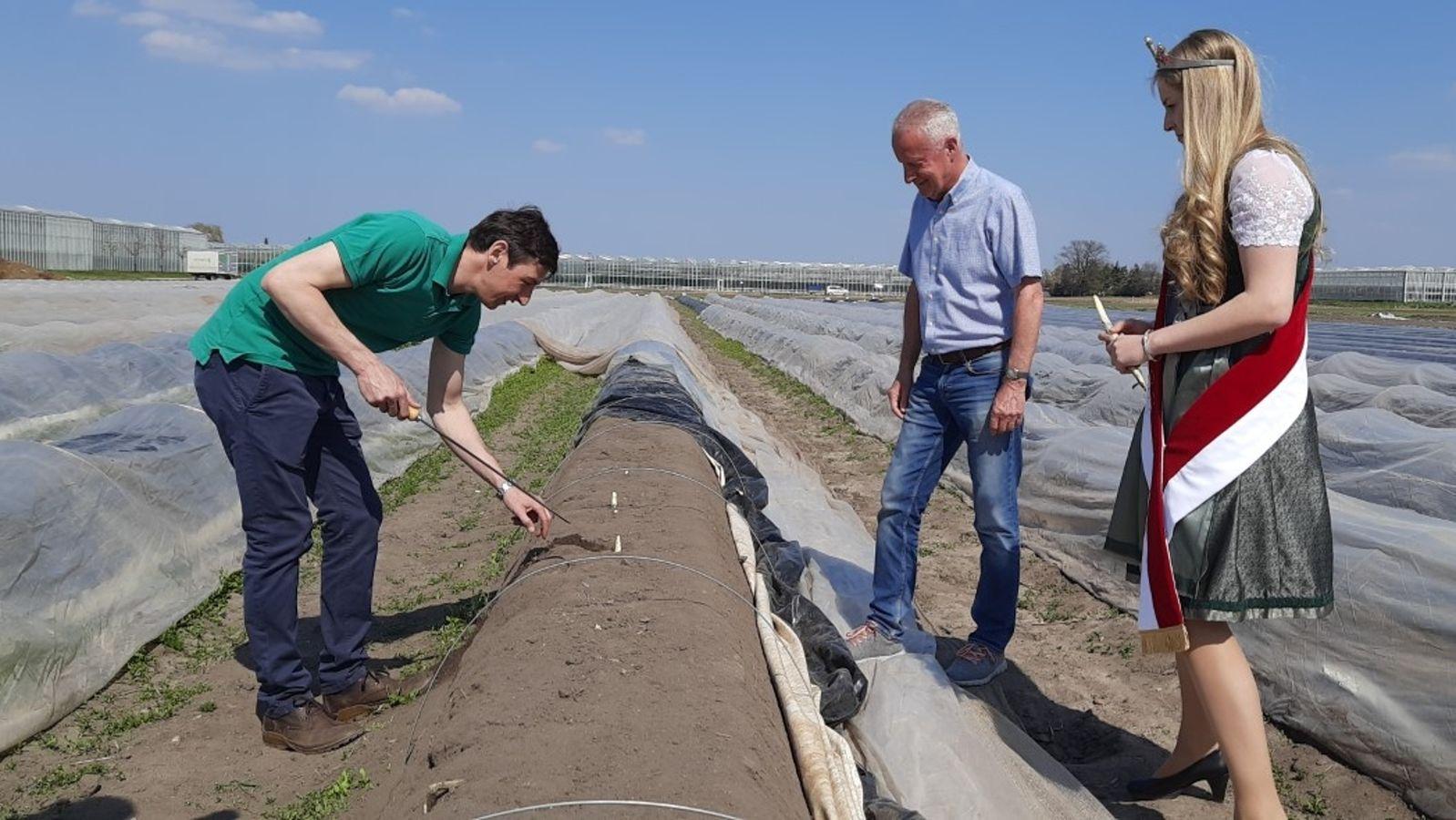 Spargelsaison im Fränkischen Knoblauchsland eröffnet