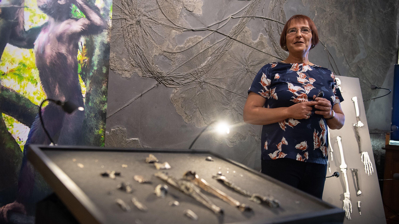 """Madelaine Böhme, Professorin für Paläoklimatologie an der Universität Tübingen, steht neben Knochen der bisher unbekannten Primatenart """"Danuvius guggenmosi""""."""