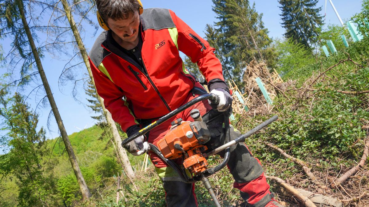 Waldarbeiter bei der Aufforstung