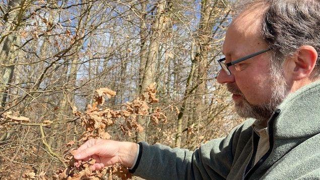 Forstdirektor Cornelius Bugl entdeckt die ersten offenen Blüten am Waldrand