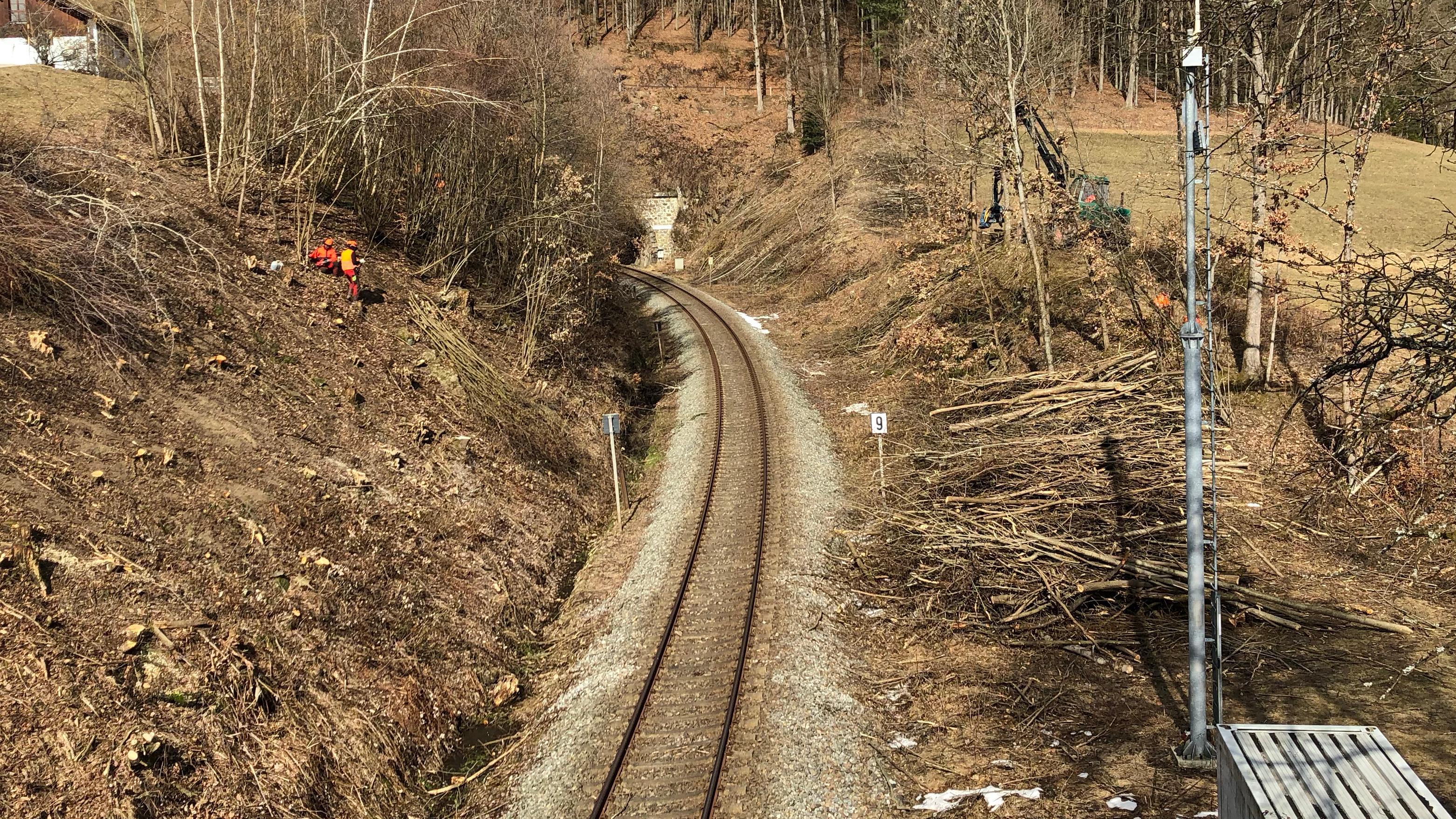 Forst- und Vegetationsarbeiten entlang der Waldbahn-Strecke