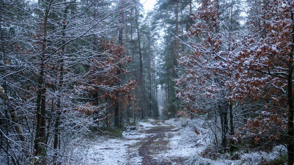 Eine zarte Schneeschicht in einem Wald im Landkreis Neumarkt in der Oberpfalz
