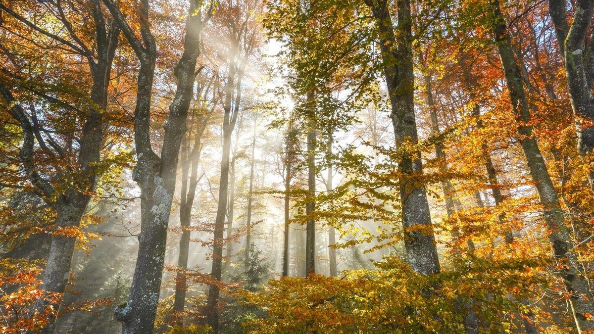 Symbolbild: Wald