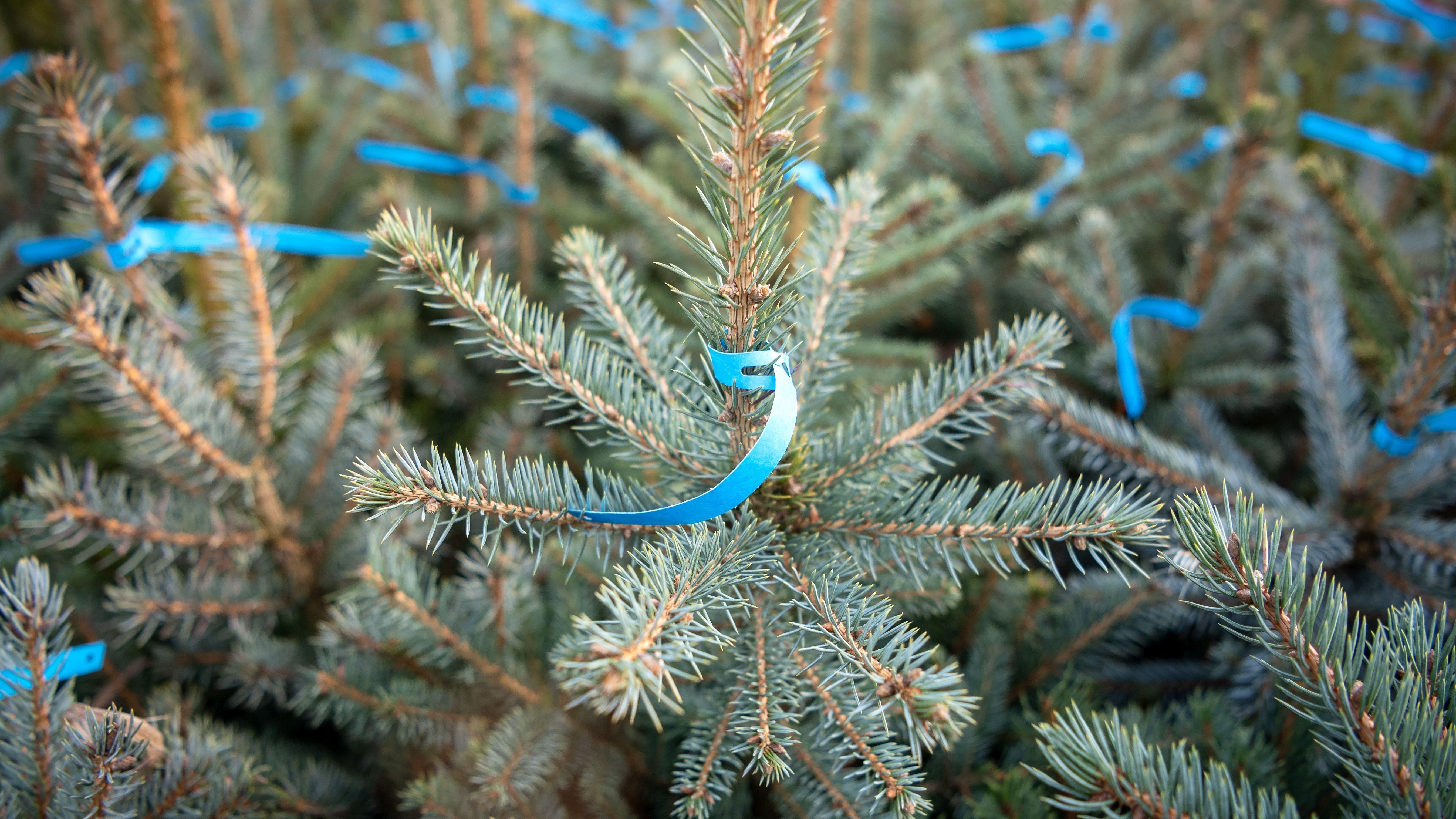 Christbaum mit blauem Etikett