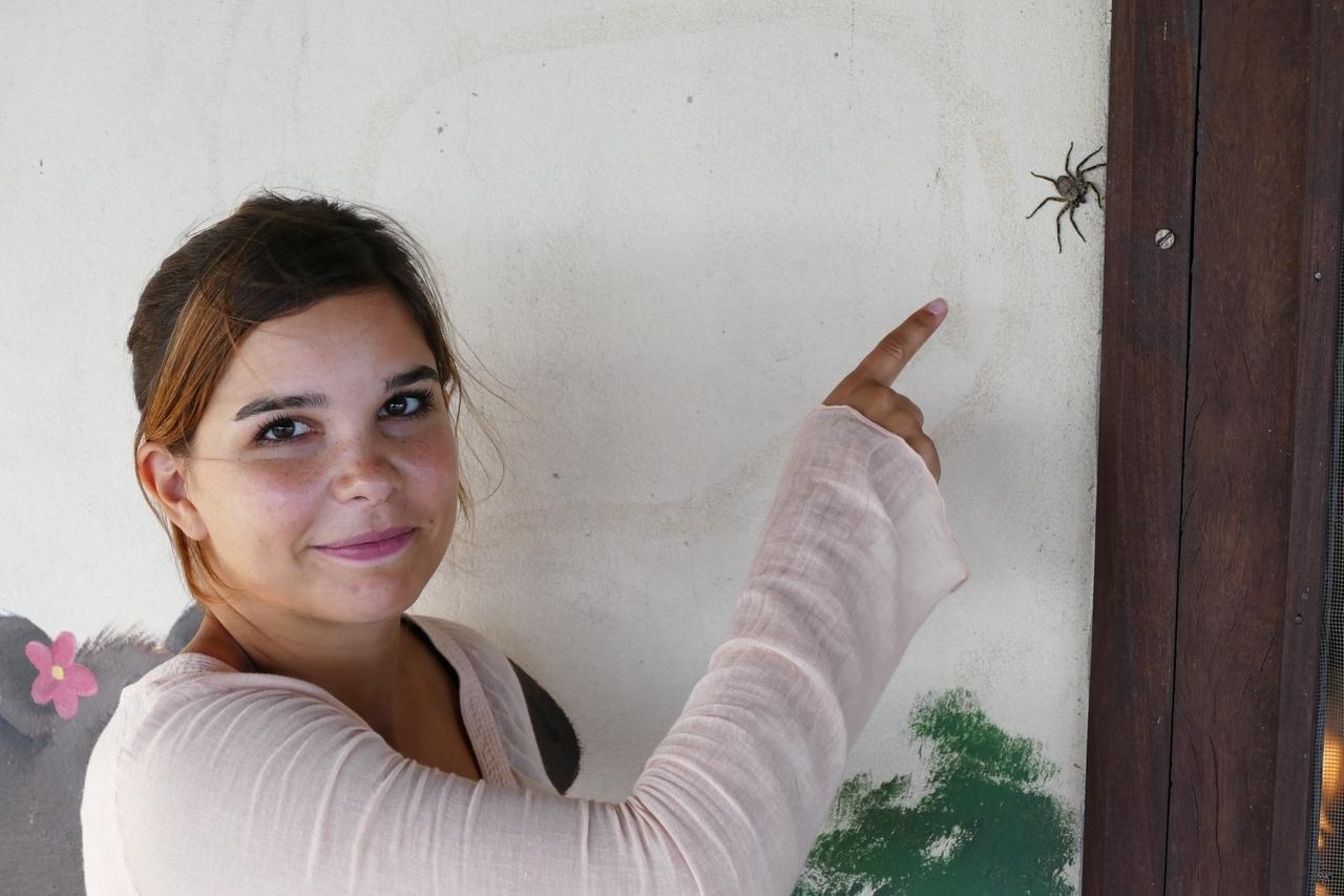 Anna Und Die Wilden Tiere Keine Angst Vor Spinnen
