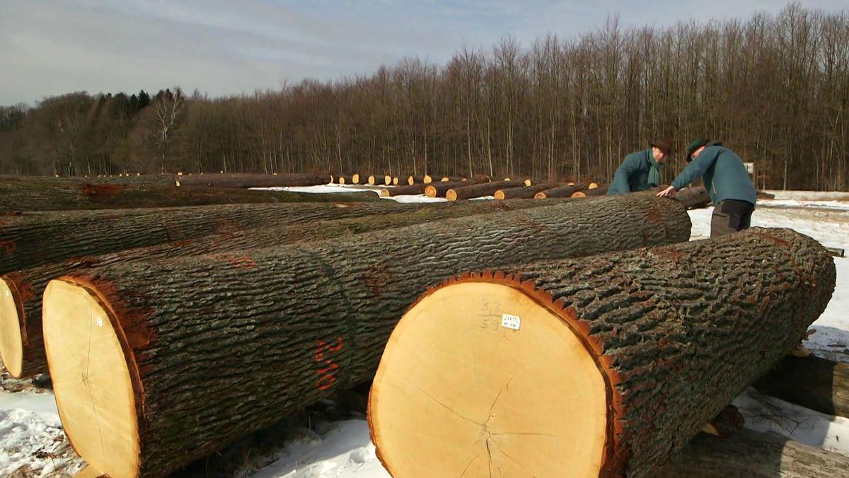 Holzversteigerung im Spessart
