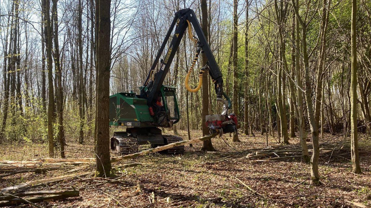 Der Harvester sieht aus wie ein Bagger mit einer Greifzange vorne, die Bäume waagrecht in der Luft halten kann.