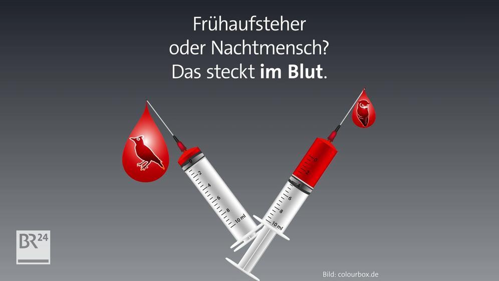 Eule oder Lerche - Bluttest ermittelt Typ   Bild:BR