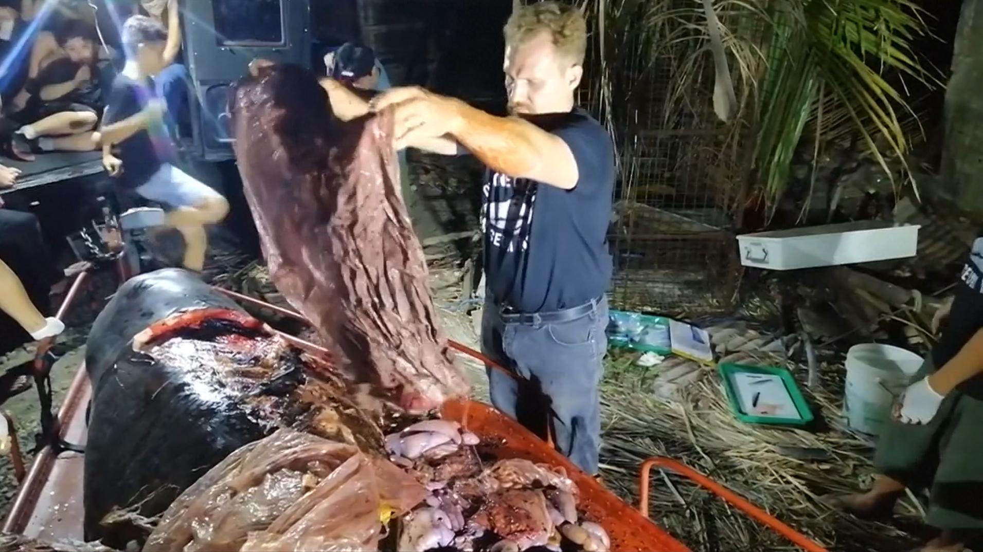 40 Kilogramm Plastikmüll hatte ein Cuvier-Schnabelwal im Magen, der an der Küste der Philippinen verendet ist.