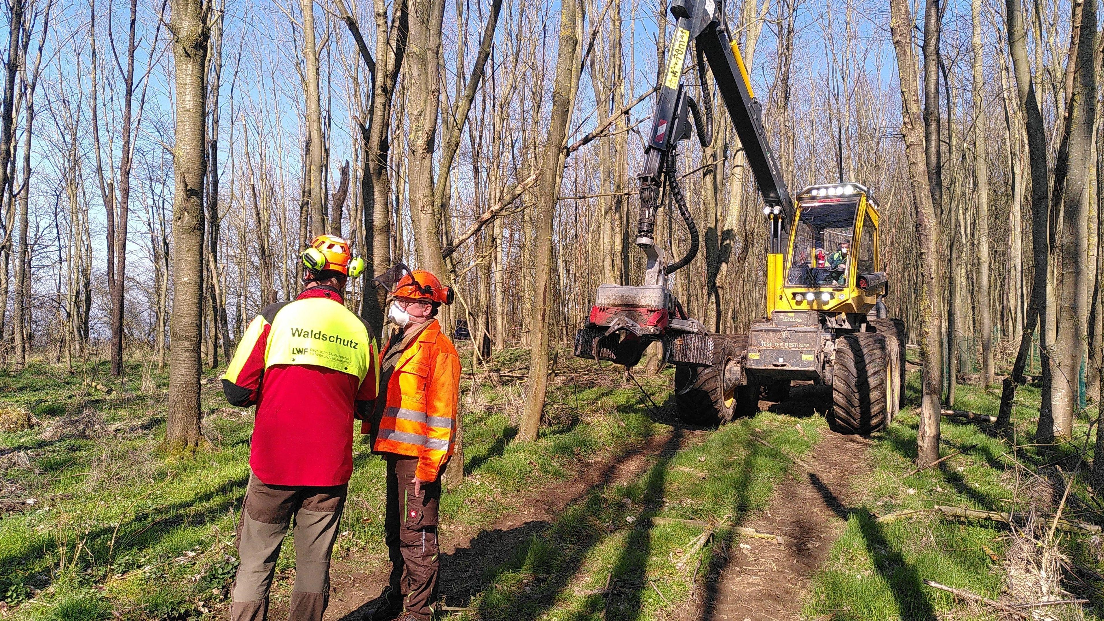 Forscher untersuchen die Rußrindenkrankheit bei Bäumen in Rottendorf im Landkreis Würzburg