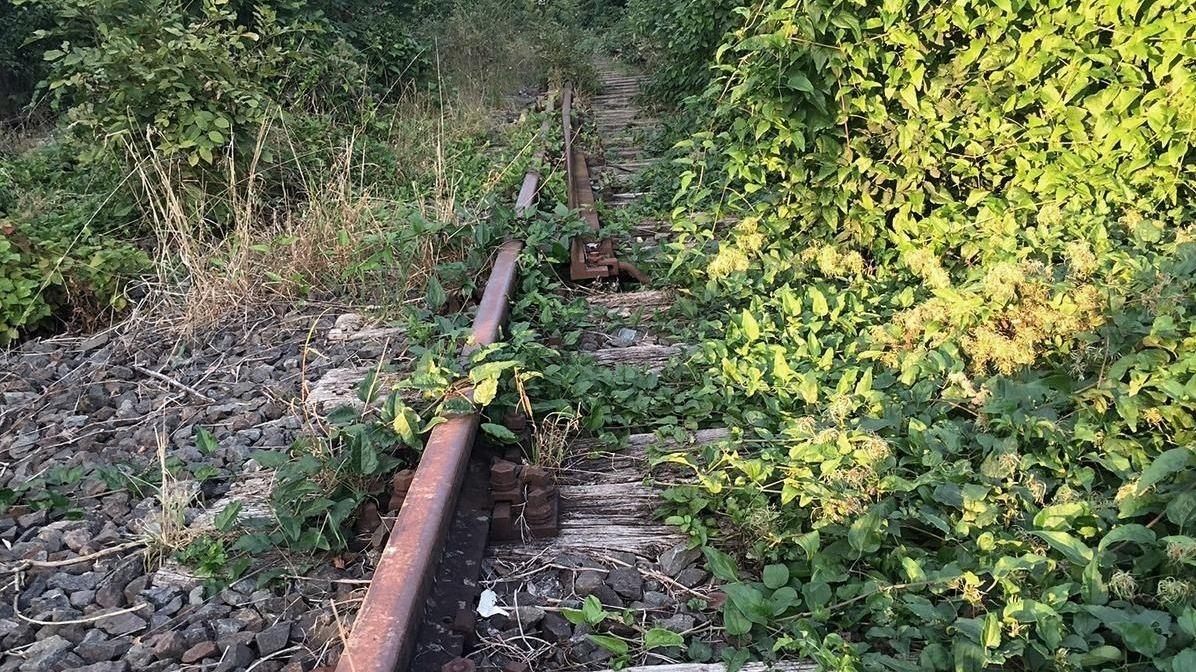 Ein zugewucherter Abschnitt der Steigerwaldbahn.