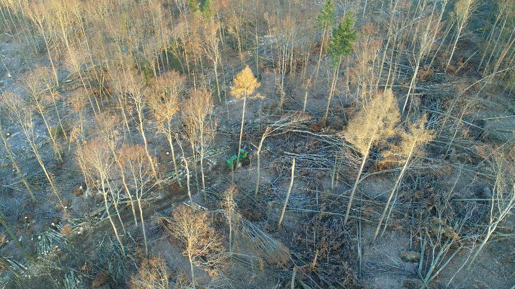 Ein Harvester richtet eine der Untersuchungsflächen im Steigerwald ein