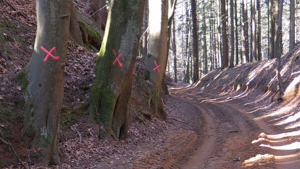 Baumstämme sind mit roten Kreuzen markiert.