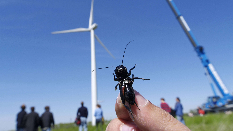 Täglich töten Windkraftanlagen Milliarden von Insekten