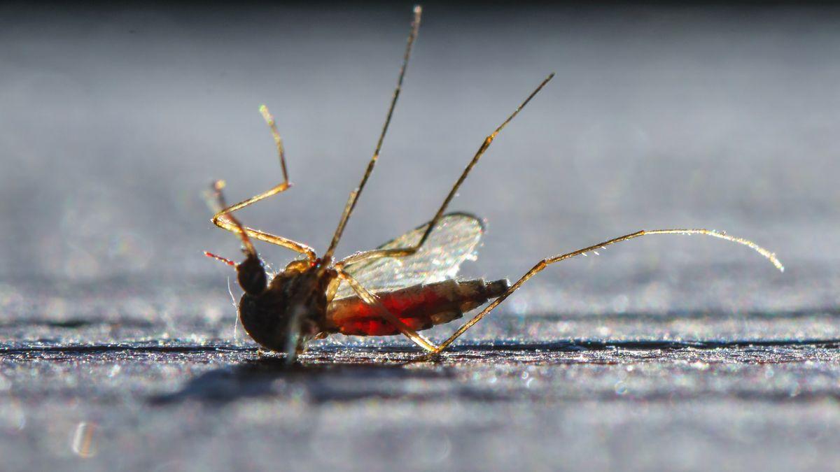 Tote Mücke liegt rücklings auf dem Boden