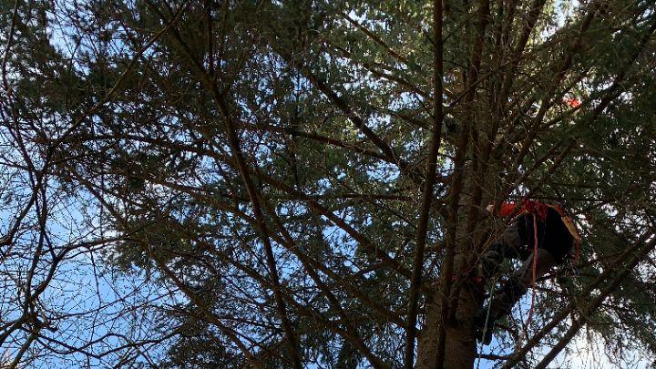 Bergwacht-Mitlieder befreien einen Gleitschirmflieger aus einer Fichte am Kreuzberg.