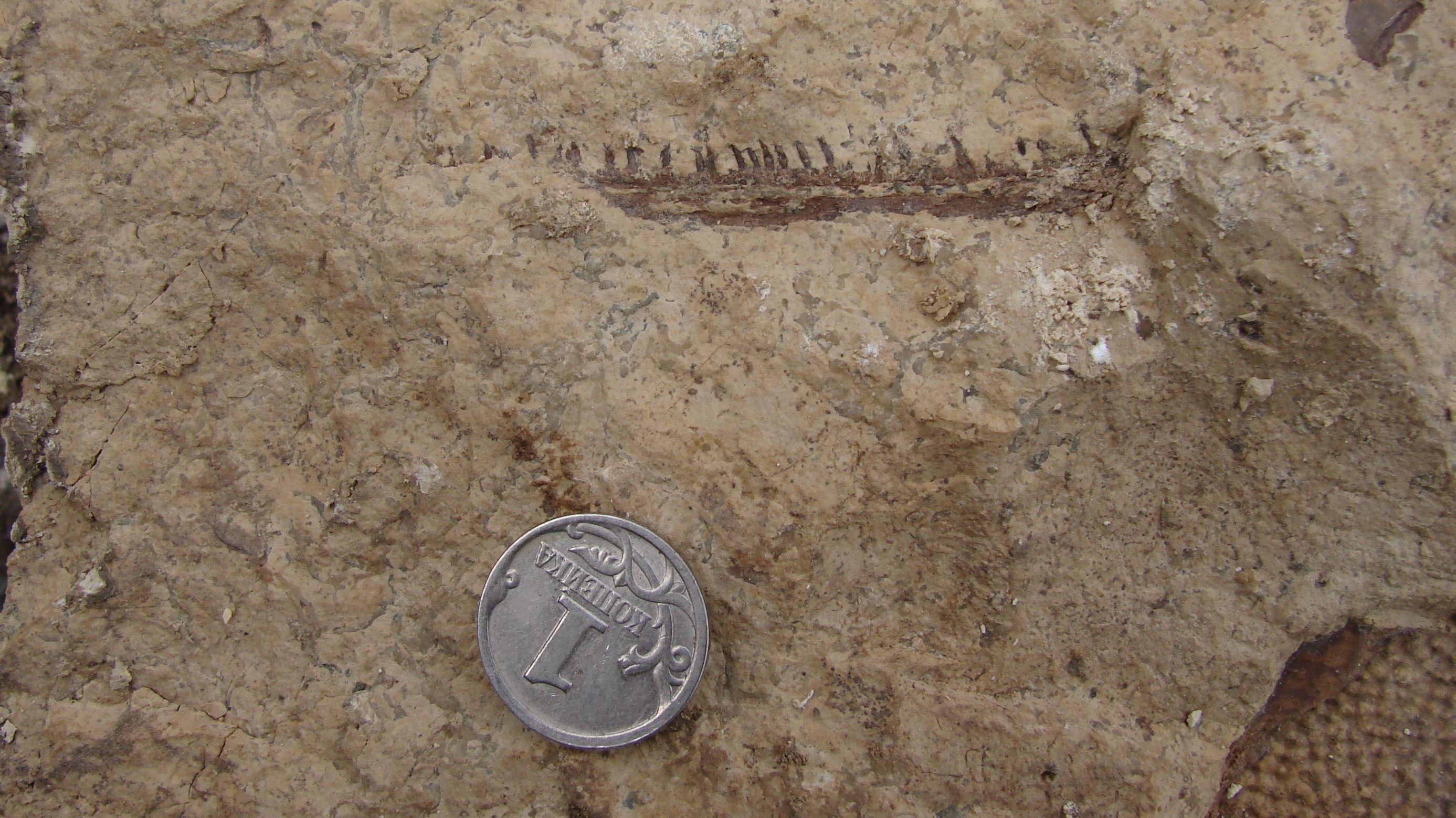 Kiefer Und Zähne des frühen Tetrapoden Parmastega aelidae