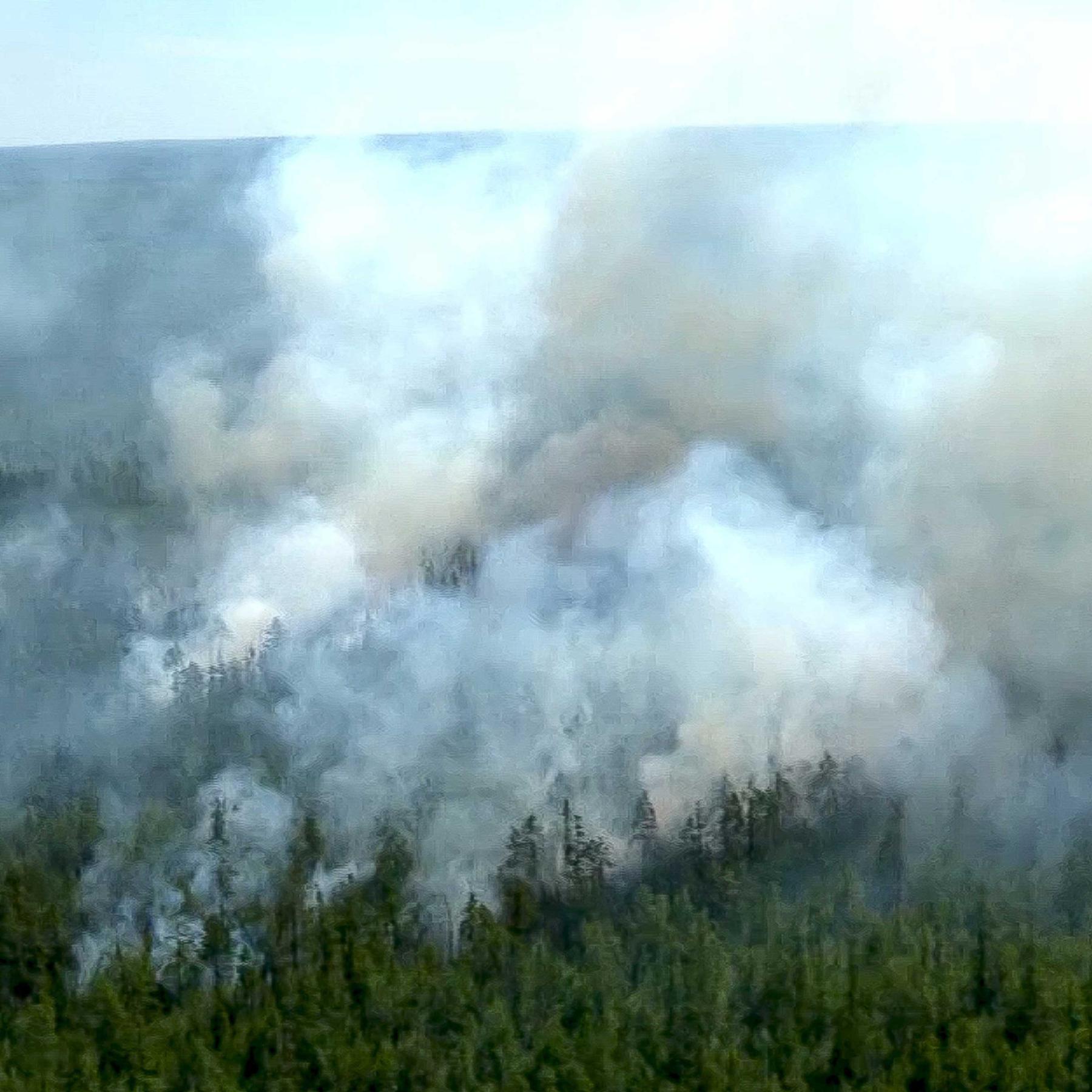 Mega-Waldbrände - Wie die Feuer die Klimakrise anheizen