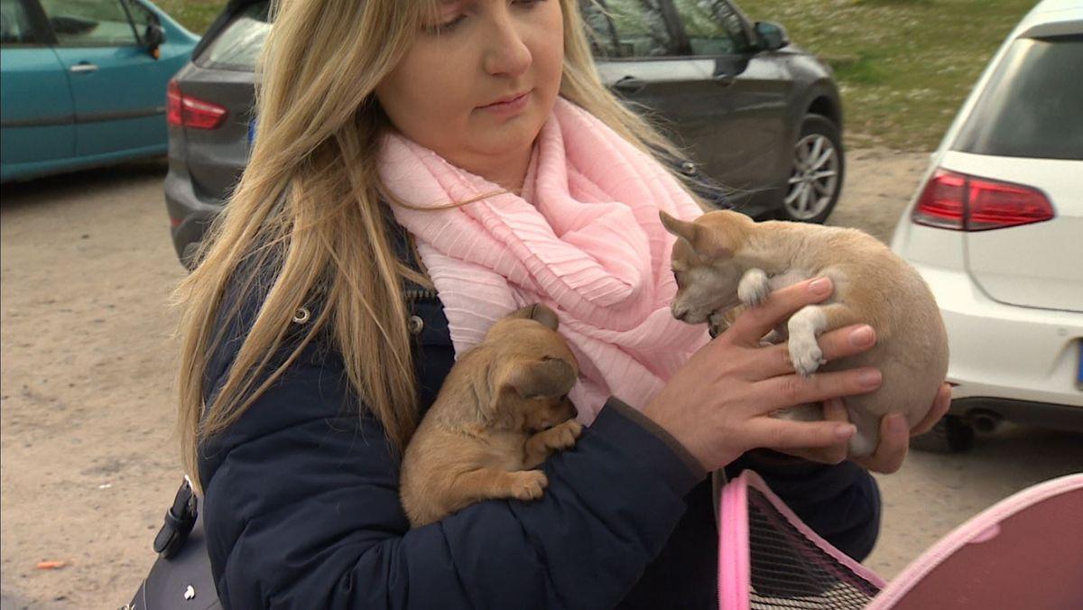 Illegaler Welpenhandel boomt aufgrund von Corona. Eine Tierschützerin hat es sich zur Aufgabe gemacht, diese Händler zu stoppen.