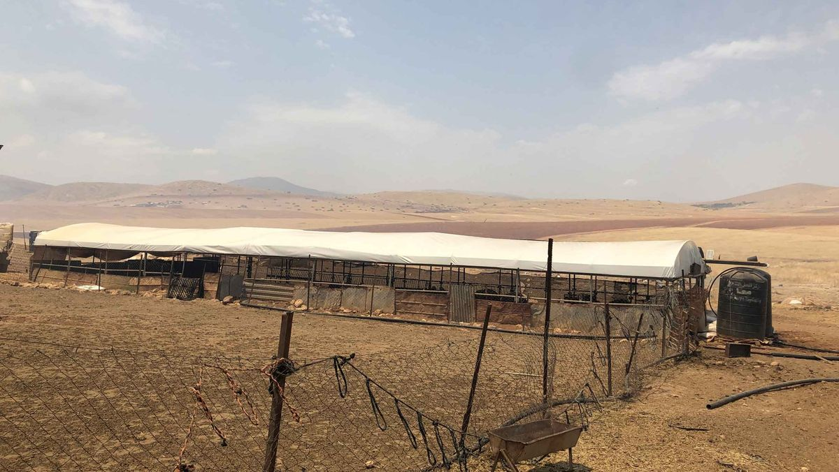 Eine rostige Stahlkonstruktion mit weißem Zeltdach bietet den Schafen Schatten in einer kargen, gelbroten Wüstenlandschaft.