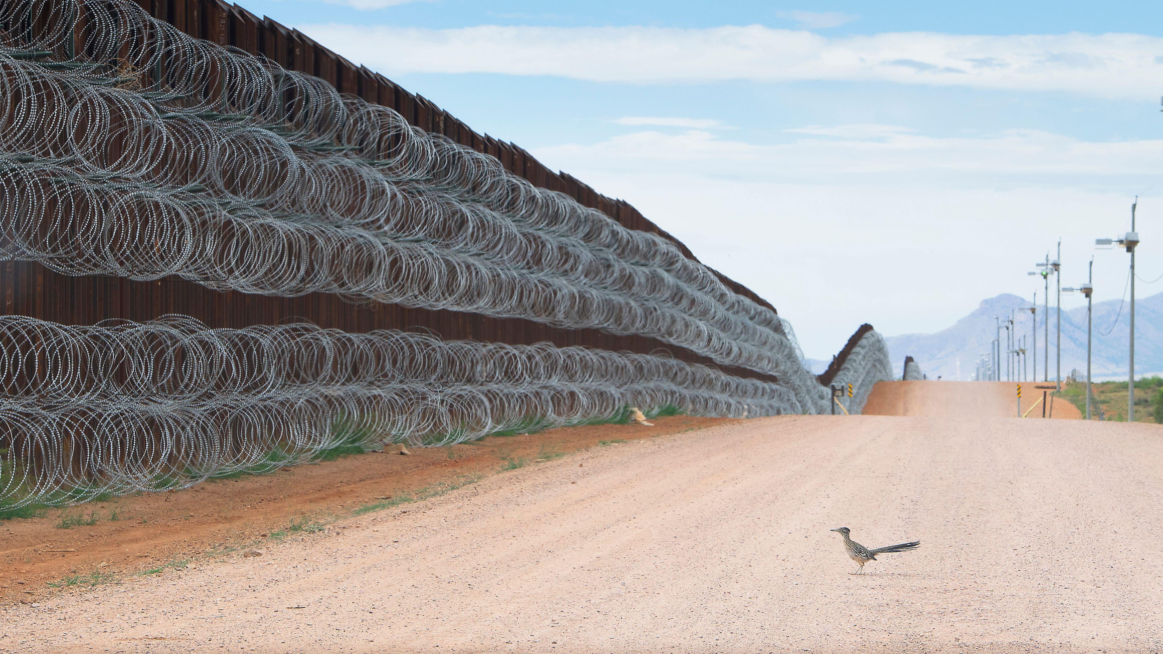 Ein Rennkuckuck vor der zukünftigen Grenzmauer der USA zu Mexiko