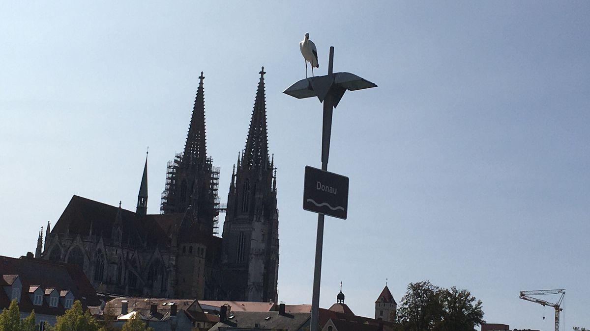 Ein Storch genießt den Ausblick auf den Dom von Regensburg.