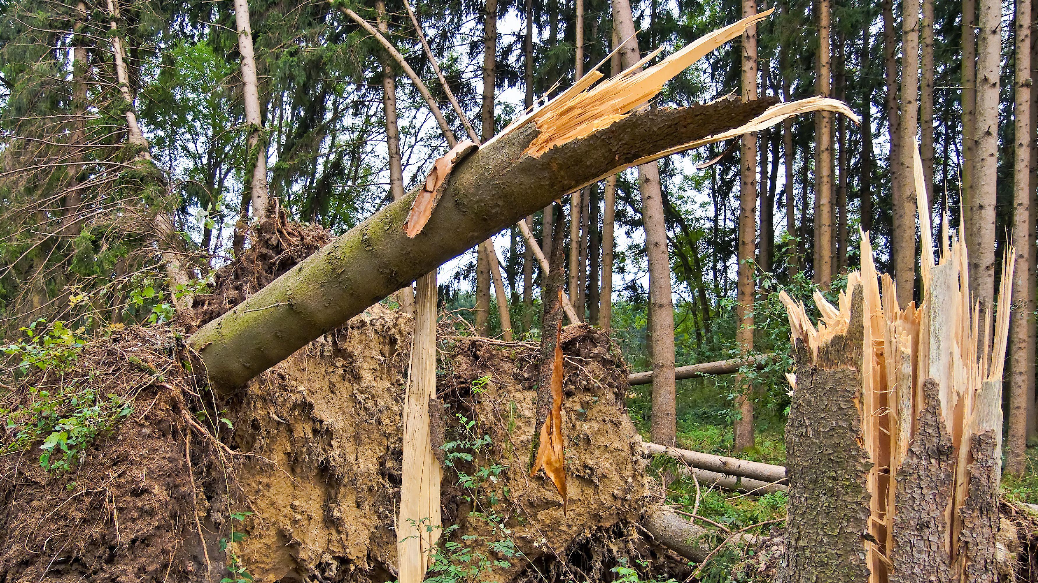 Wald nach Sturmschaden (Symbolbild)