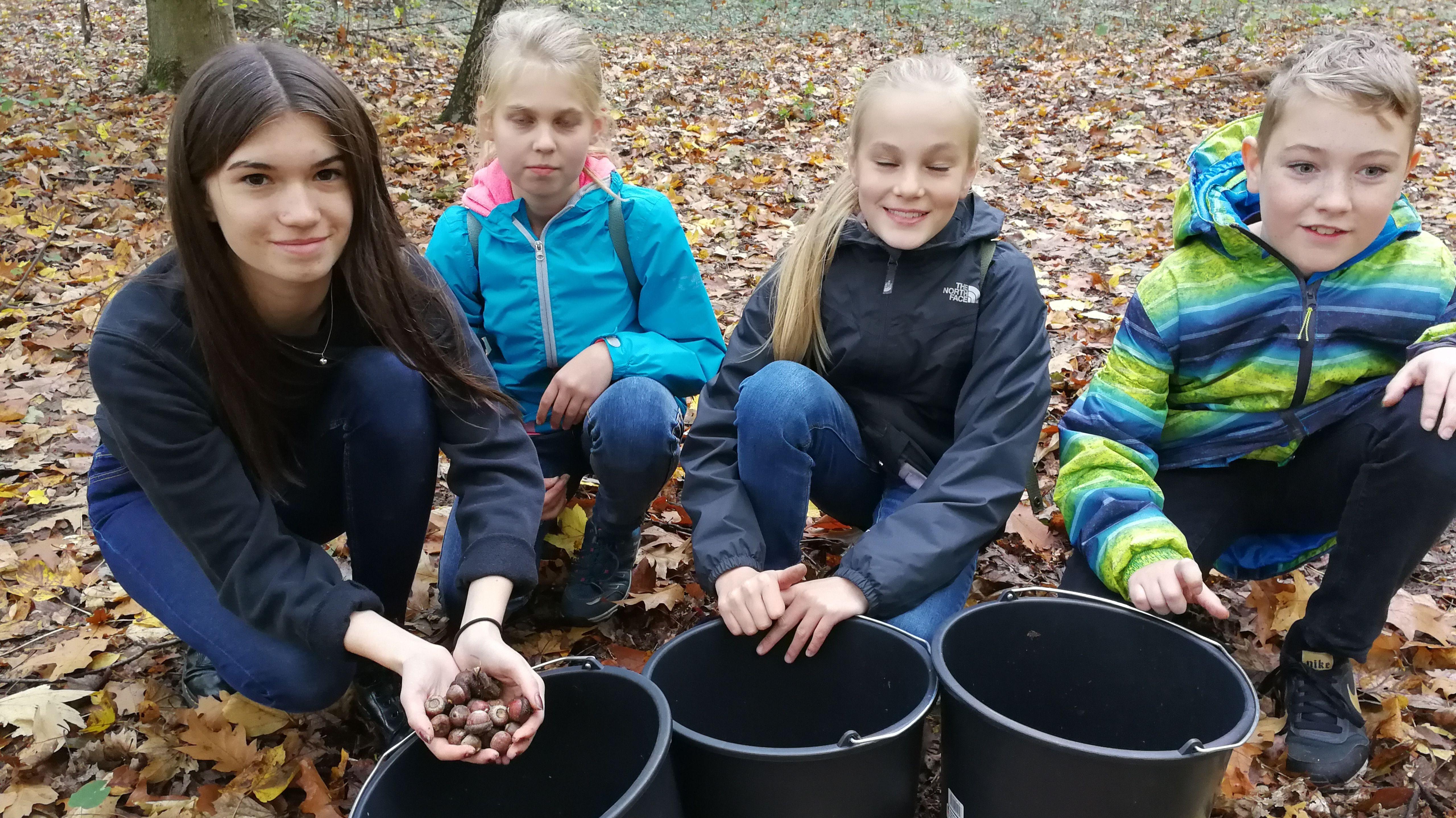 Kinder sammeln Eicheln für klimafesten Wald