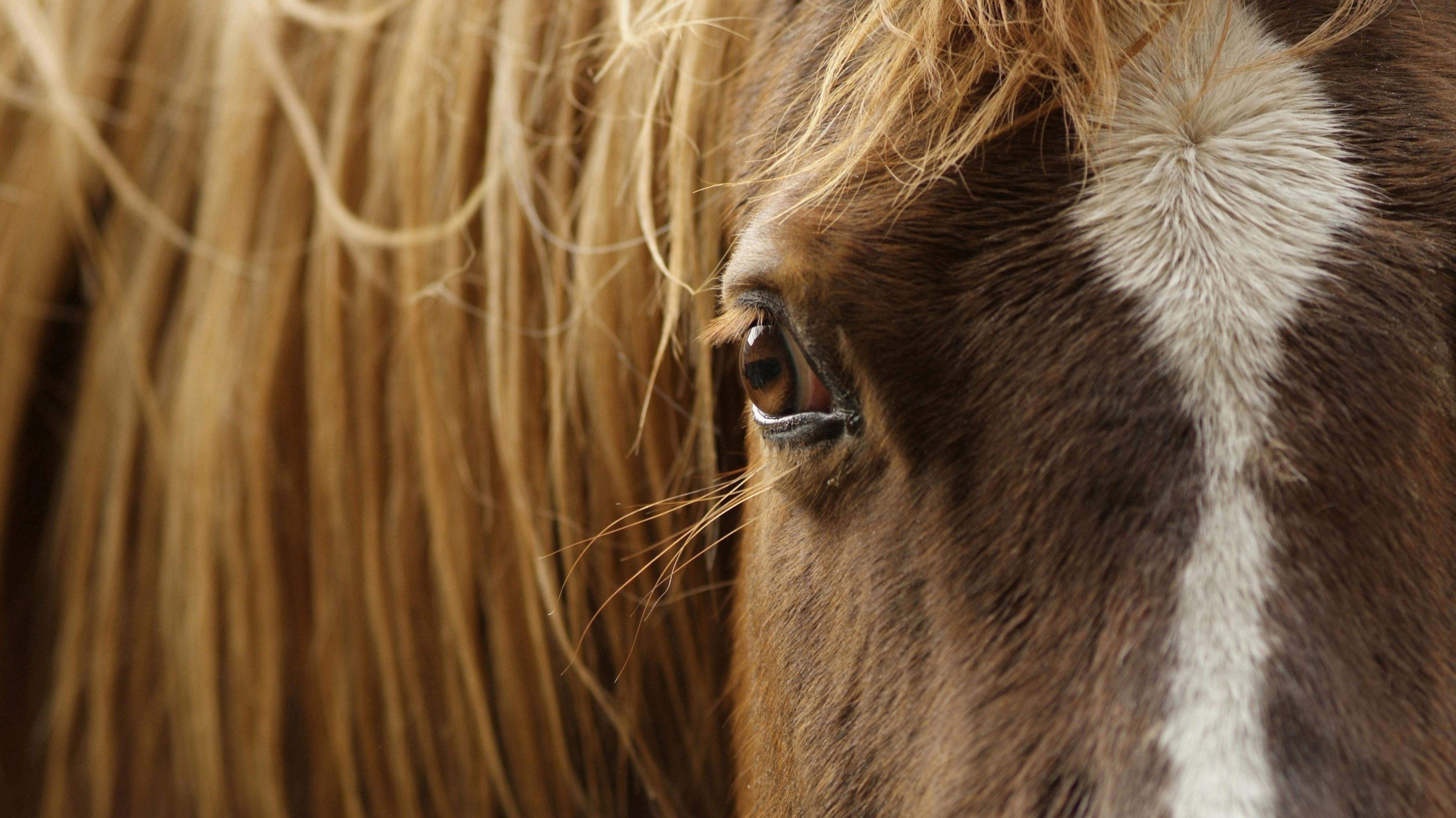 Ein Pferd schaut in die Kamera (Symbolbild).