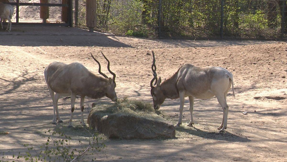 Tiergarten Nürnberg öffnet wieder