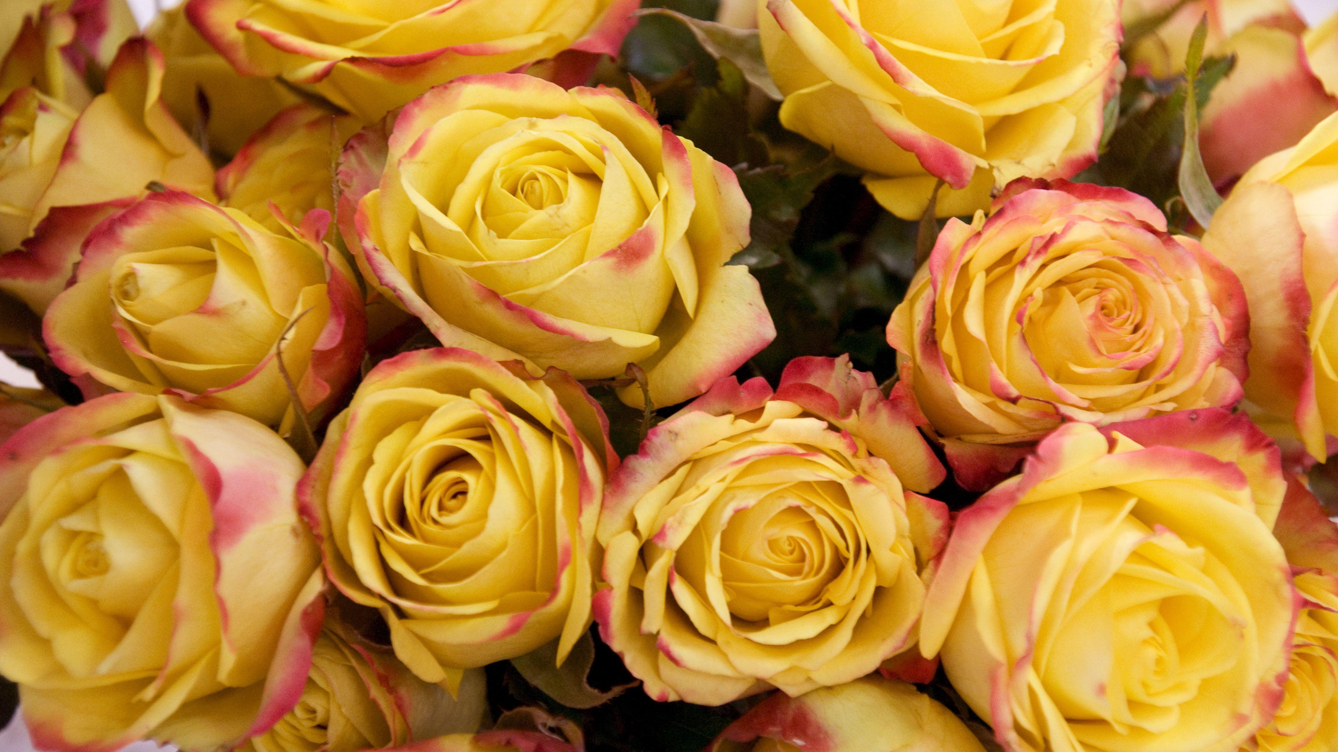 Ein Strauß gelber Rosen