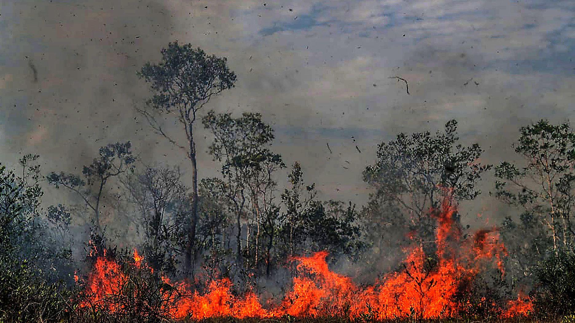 Bei einem schweren Waldbrand im Amazonas Ende August fressen sich die Feuer durch den Baumbestand.