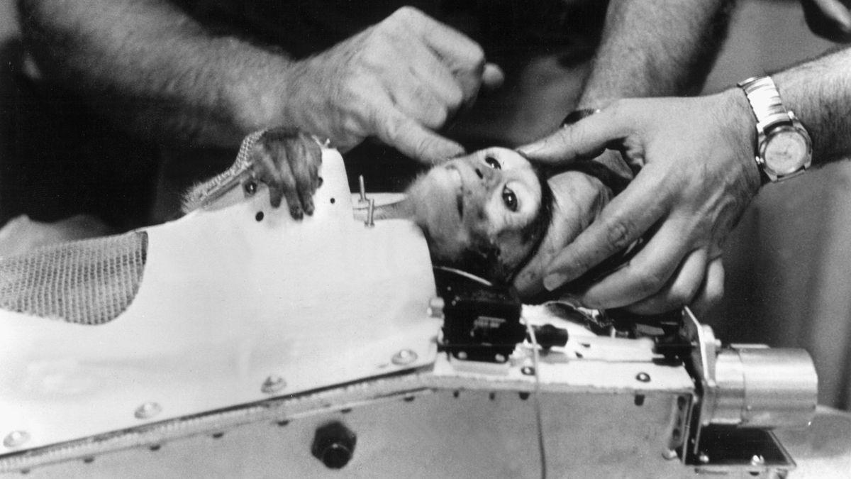 Nach seinem Flug ins All am 28. Mai 1959 wird der Affe Able aus seiner Kapsel geborgen.