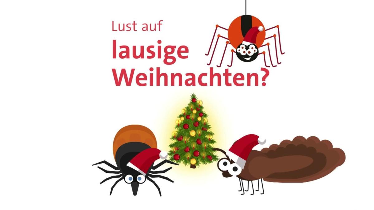 Insekten vor einem Weihnachtsbaum